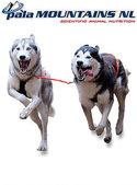 PalaMountains-Exceed-(voor-werk--en-sporthonden)
